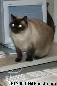 gato sobre el teclado.jpg